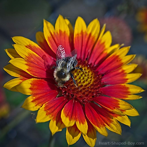 Another Flower, Another Bee