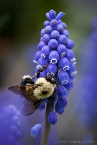 Bee & Bluebells