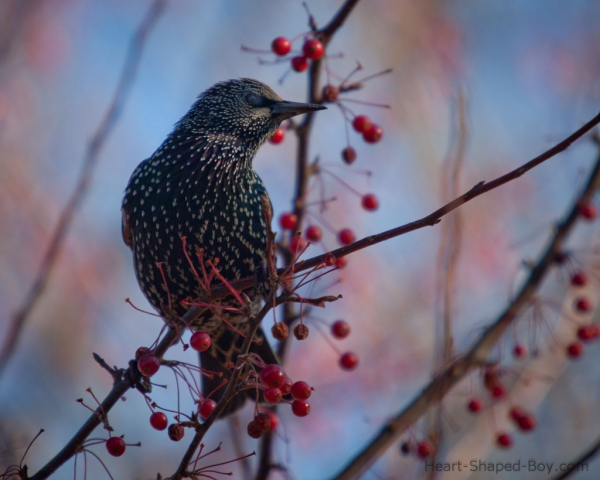 Bird & Berries