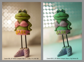 Babe Frog Diptych